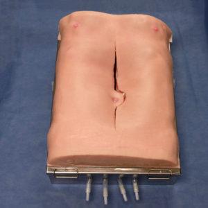 Abdominal Aortic Aneurysm (AAA) Torso Simulator