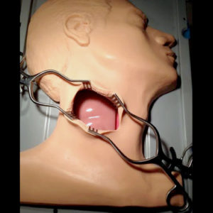 VI Carotid Head Medical Simulator Procedure Endarterectomy